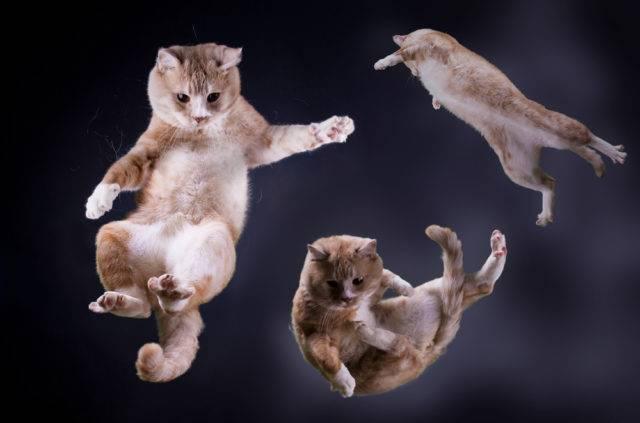 ciekawostki o kotach skaczący kot