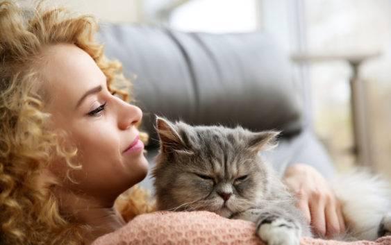 Co warto wiedzieć o kotach?