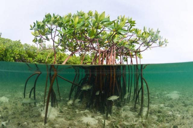 namorzyny na bahama