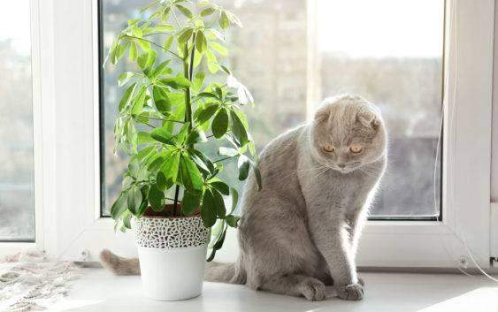 Rośliny doniczkoweniebezpieczne dla kota