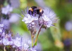 W jaki sposób owady zapylają kwiaty?