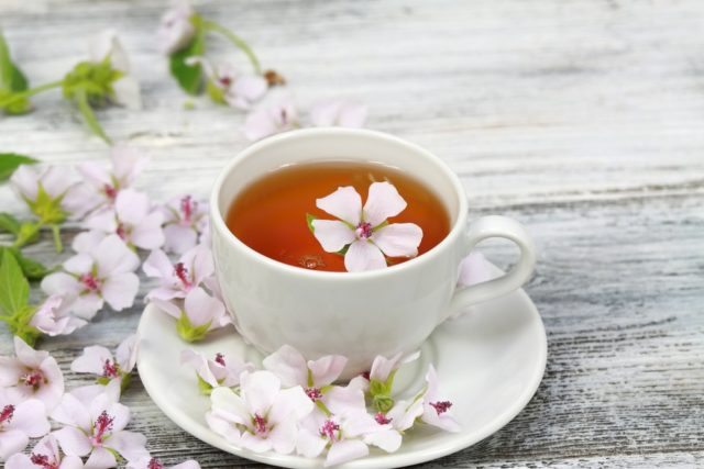 prawoślaz lekarski herbata