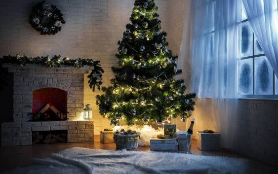 Roślinne symbole Bożego Narodzenia