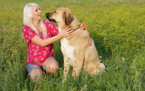 Duże Rasy Psów Chart Nowofundland Dog Niemiecki Wychowanie I Opieka