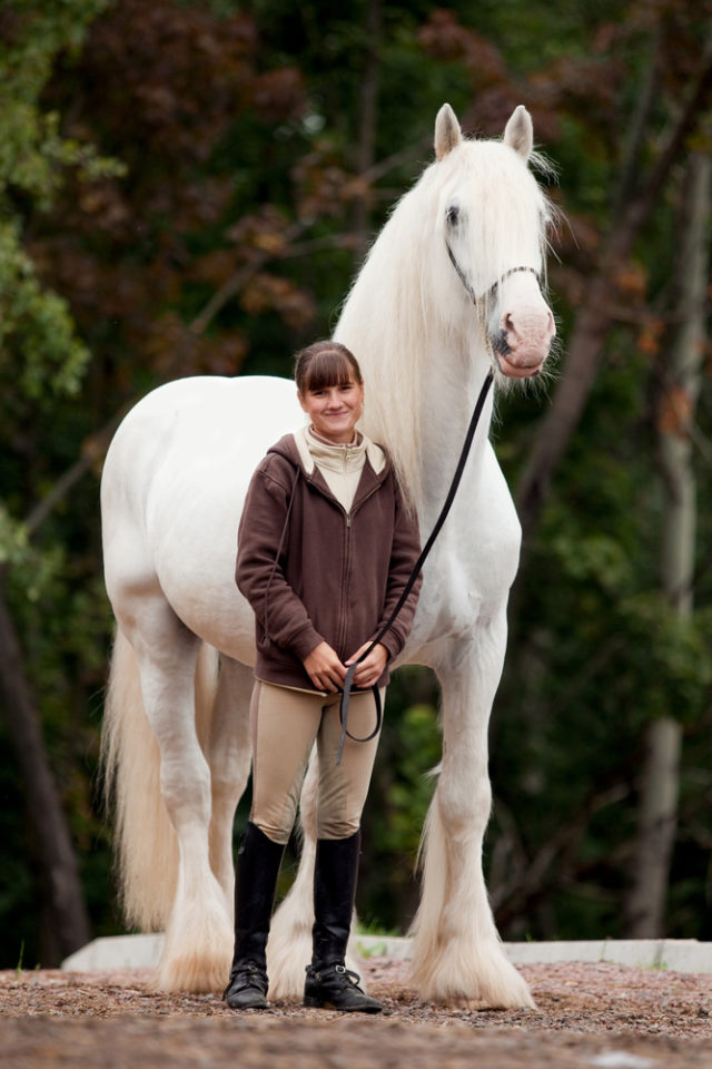 shire największy koń świata