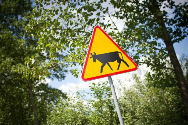 znak ostrzegawczy zwierzęta gospodarcze