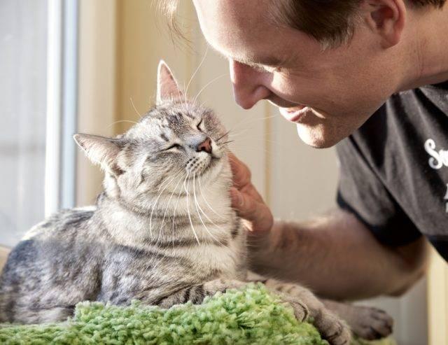 co warto wiedzieć o kotach domowych