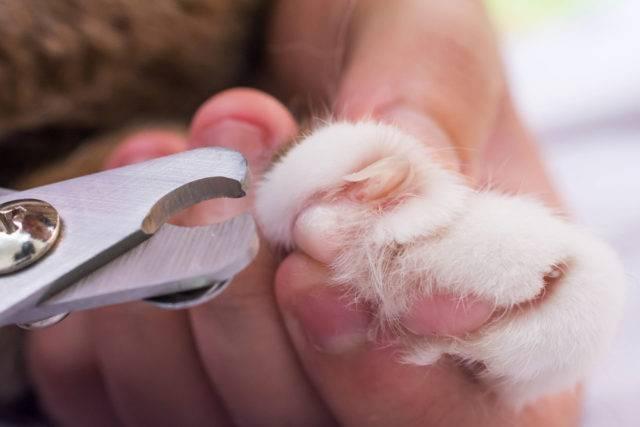 co warto wiedzieć o kotach jego pielegnacja