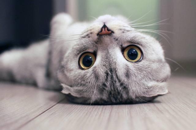 o kotach