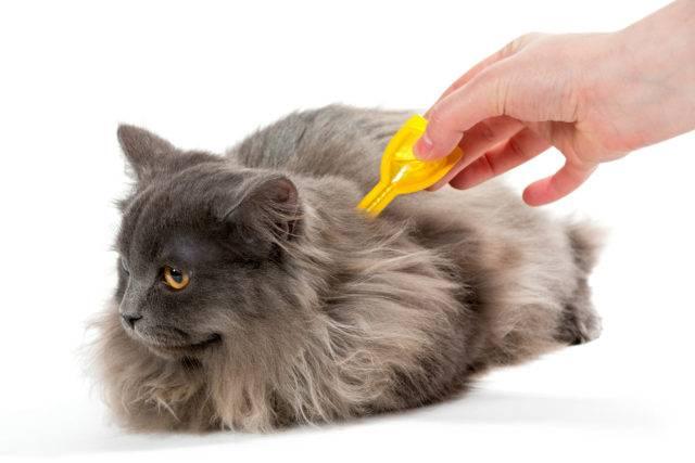 ochrona kota przed pasożytami