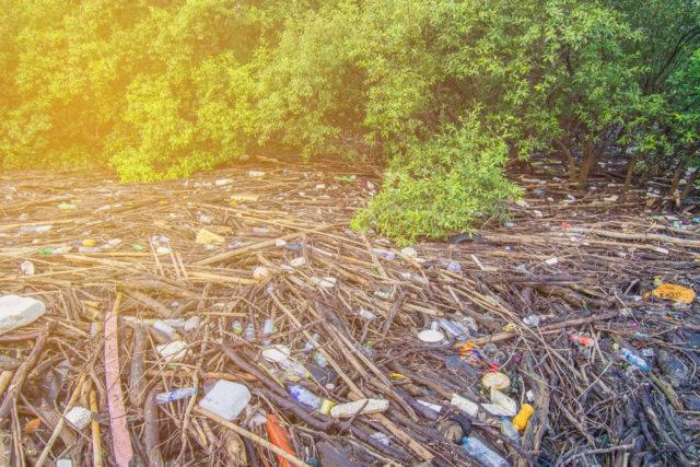odpady śmieci w lesie namorzynowym