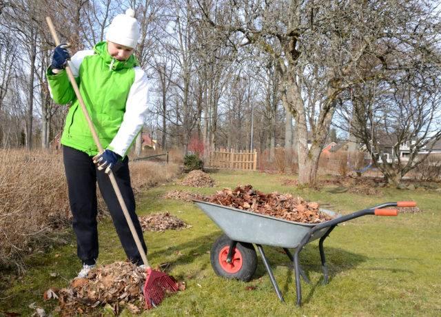 wiosenne prace w ogrodzie to grabienie starych liści