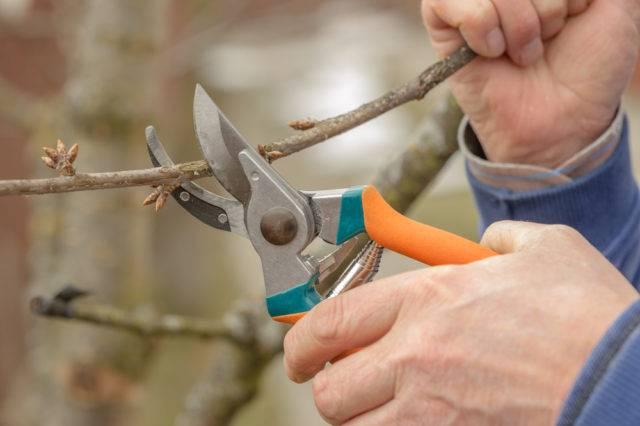 wiosenne prace w ogrodzie przycinanie i formowanie drzew i krzewów