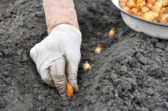 wiosenne prace w ogrodzie to sadzenie cebul