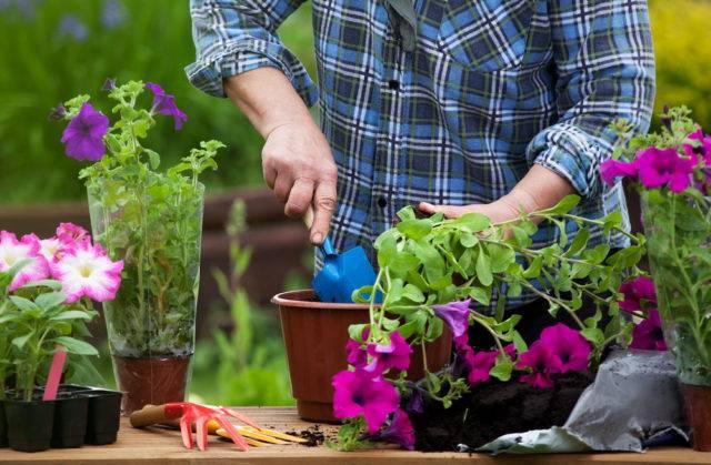 wieosenne prace w ogrodzie to również sadzenie kwiatów