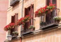 Przechowywanie kwiatów balkonowych