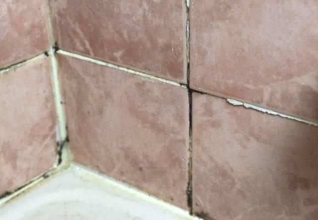 pleśń w kabinie prysznicowej