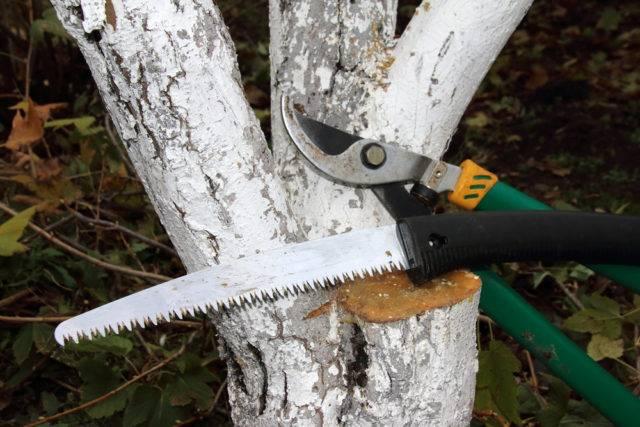 podstawowe narzedzia do przycinania drzew owocowych