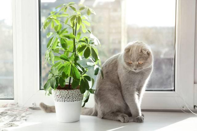Rosliny Doniczkowe Niebezpieczne Dla Kota Lista Roslin Trujacych Dla Kotow