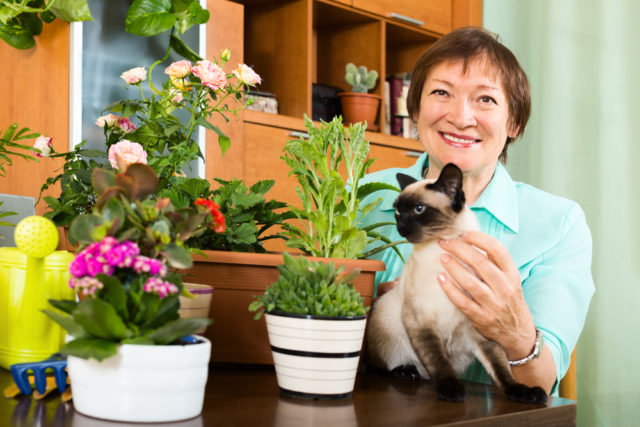 rośliny doniczkowe niebezpieczne dla kota domowego