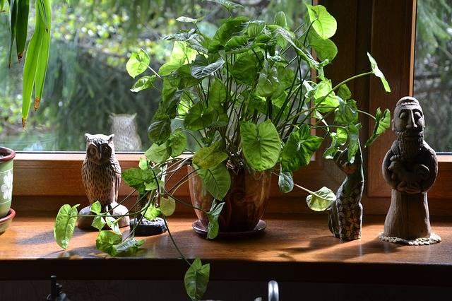 Kwiaty W Domu Ich Znaczenie I Wplyw Na Nasze Zdrowie