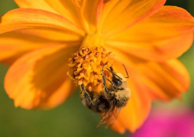 w jaki sposób owady zapylają kwiaty w ogrodzie