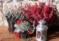Co sadzić jesienią w ogrodzie?