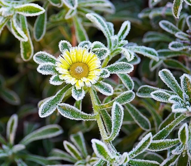 trzech ogrodników i zimna zośka