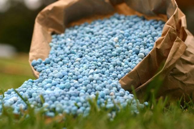 wybór nawozu obornik naturalny czy granulowany sypki