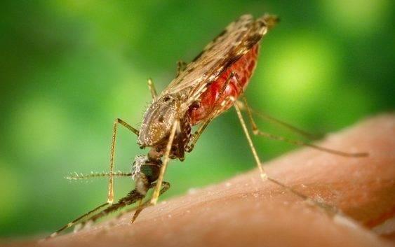 Domowe sposoby na ukąszenia owadów