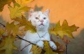 Jakie są koty? – nasze relacje z kotami