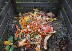 Co to jest kompost i jak powstaje?