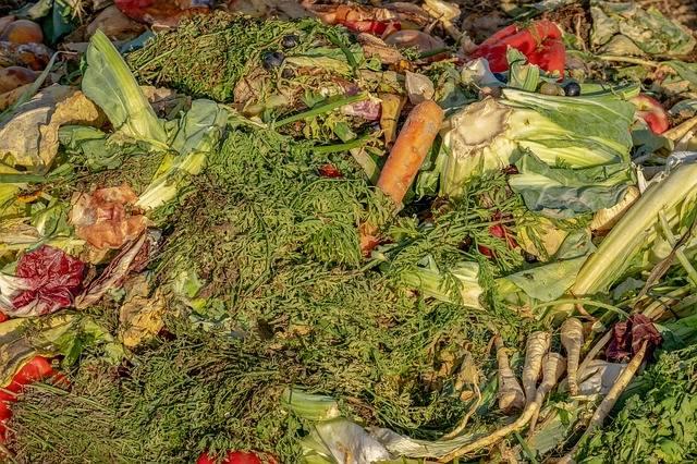 co to jest kompost i gdzie go zbudować
