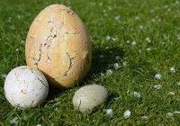 Ile waży jajko?