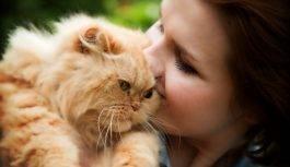 Czym można się zarazić od kotów?