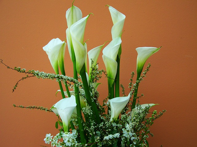 kwiaty na grób calla