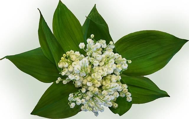 kwiaty na grób konwalie