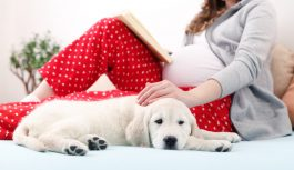 Ciąża a zwierzęta domowe