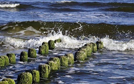Zwierzęta żyjące w Morzu Bałtyckim